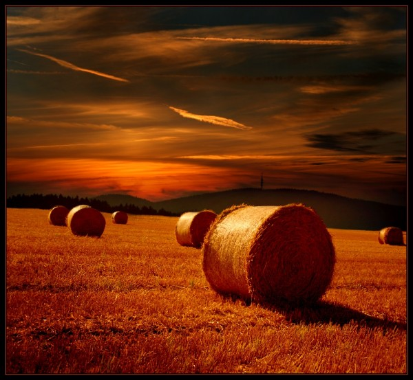 Nature Shot#28 by Veronika Pinke