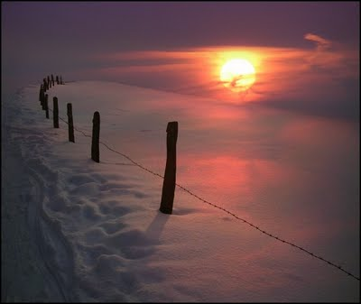 Nature Shot #5 by Veronika Pinke