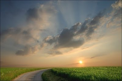 Nature Shot#9 by Veronika Pinke