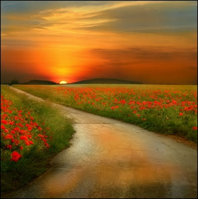 Nature Shot #14 by Veronika Pinke