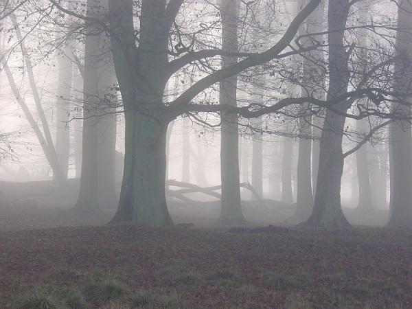 Fog in Dyrehaven near Copenhagen Denmark by Øyvind Strøm