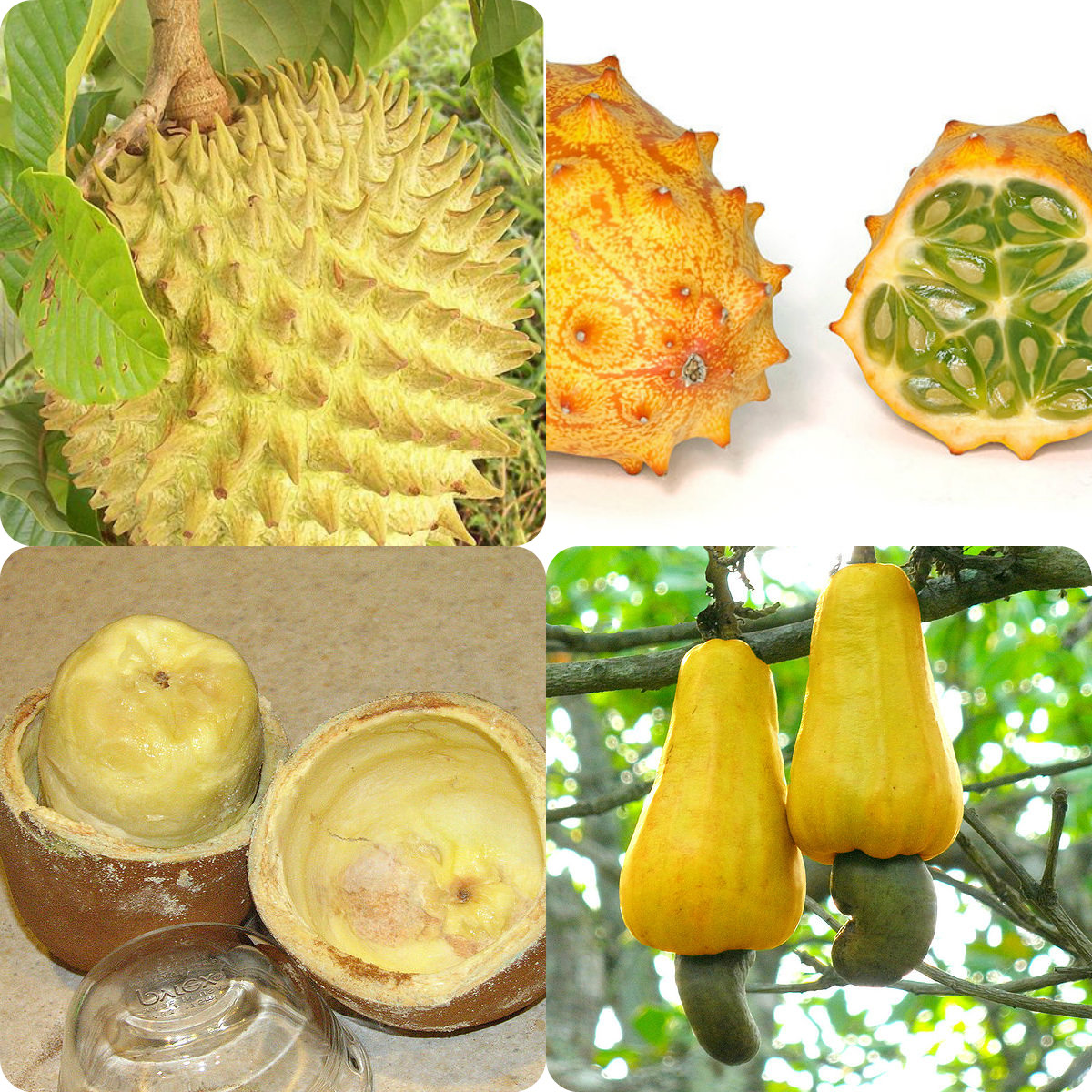 ... Exotic Fruits… Biriba, Horned Melon, Cupuacu, Cashew Fruit collage