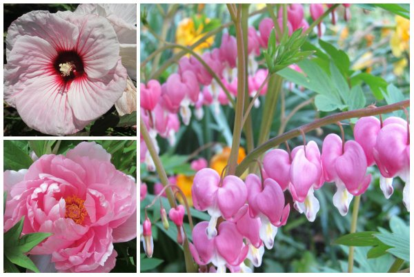 Flora in Pink - Mirth and Motivation