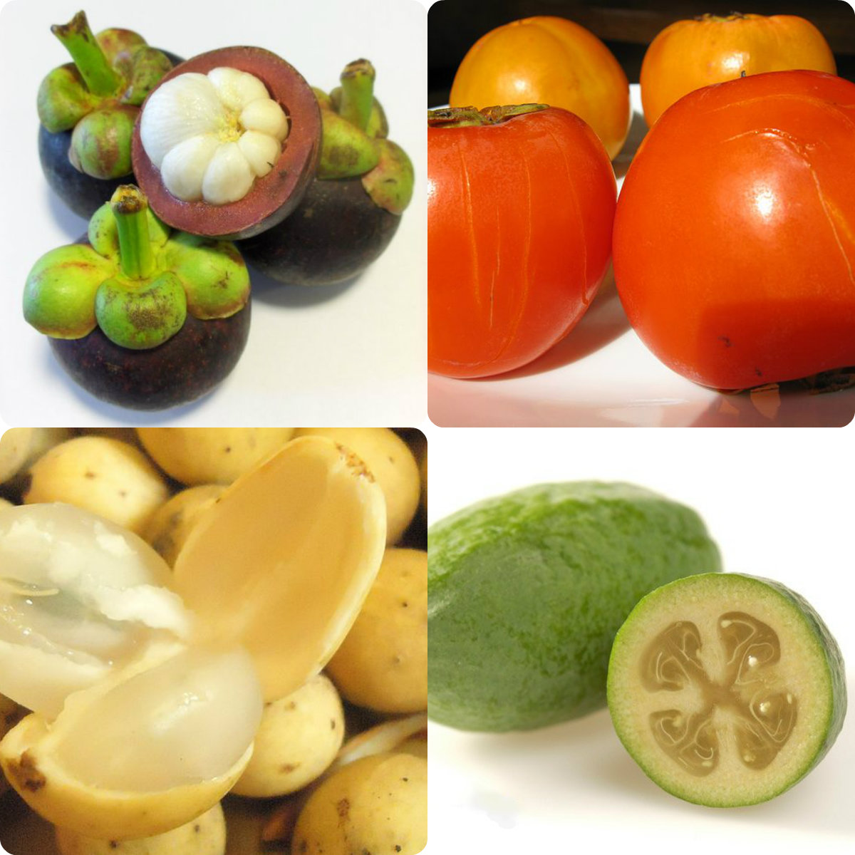 List of Tropical Fruit...