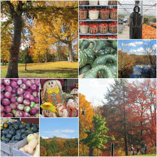 Weekly Photo Challenge: Changing Seasons... Fall delights