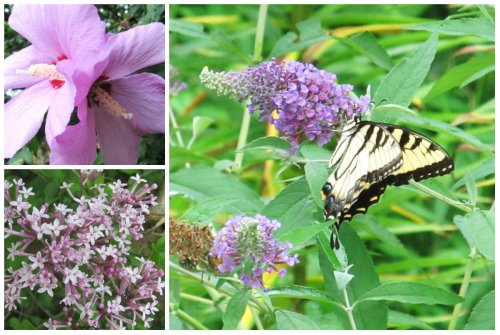 Weekly Photo Challenge: Delicate