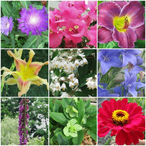 Weekly Photo Challenge: Changing Seasons... Summer Flora