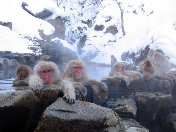 Reflections: In Hindsight, Optimism Prevails... Monkeys at rest