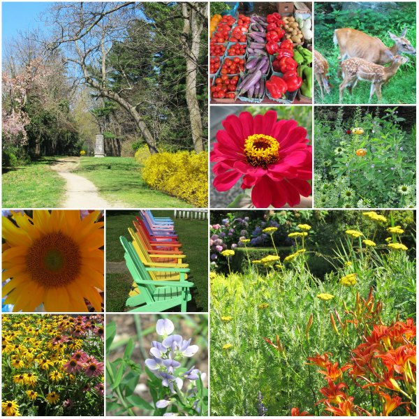 Weekly Photo Challenge: Changing Seasons... Summer
