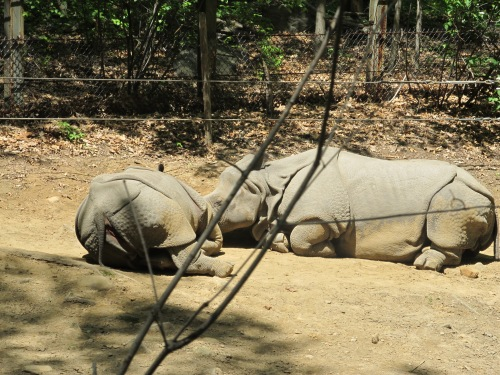Weekly Photo Challenge: Kiss...  Do Rhinos kiss?