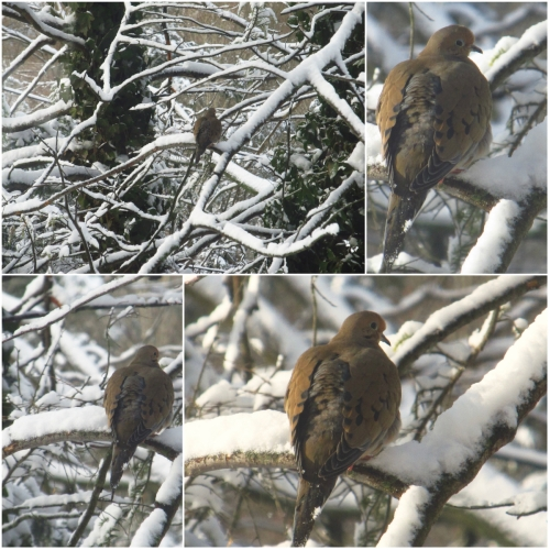 Weekly Photo Challenge: Perspective - Bird in the Snow, New York