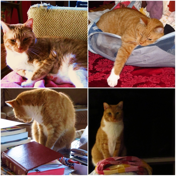 Weekly Photo Challenge: FRAY - A collage of Tangy in the fray...
