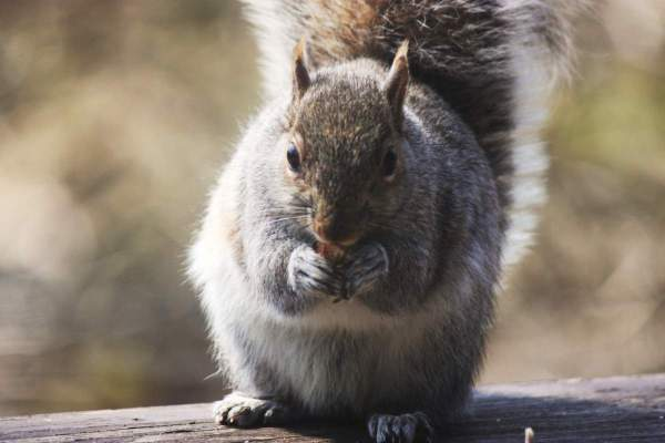 Weekly Photo Challenge: Ephemeral - Squirrel eating