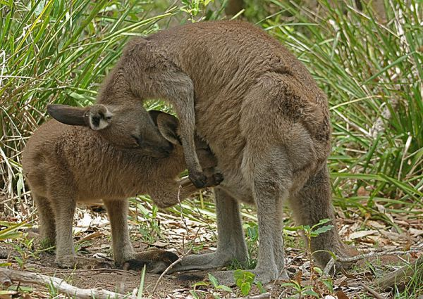 Women's History Month: Curriculum Of A Mom - Kangaroo Mom and baby