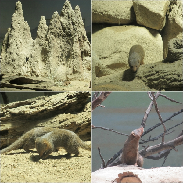 Photo 101 Revisited: Week 1 & 2 - Take Ten! - Mongoose Home