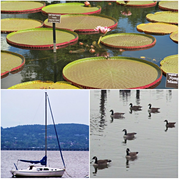 Weekly Photo Challenge: AFLOAT... lotus pads, a boat and ducks in a pond