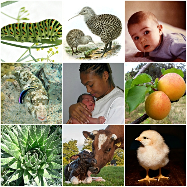 Motivation Mondays: GROWTH - All life forms