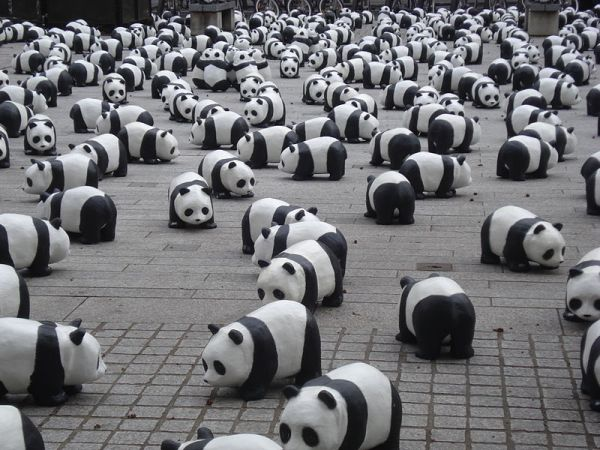 Earth Hour & Earth Day: Differences To Remember - Pandas for Earth Hour