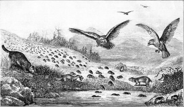 Haiku: GROUPTHINK - Like migrating lemmings