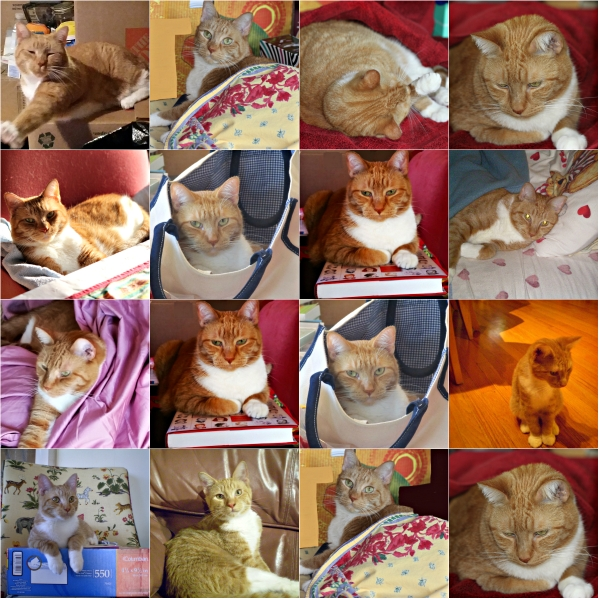 Weekly Photo Challenge: MUSE... Tangy Cat is my Muse