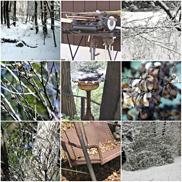 Weekly Photo Challenge: OFF-SEASON - Dormant Garden and Plants