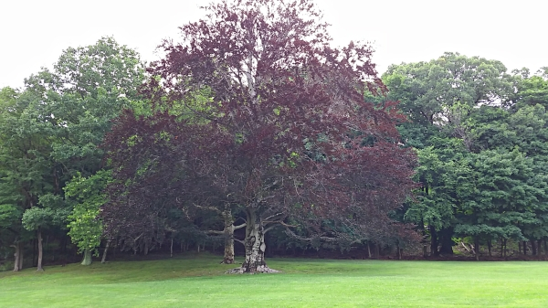 Weekly Photo Challenge: SYMBOL - TREE