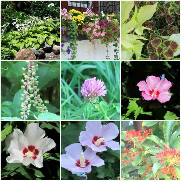 Weekly Photo Challenge: Today Was A Good Day - A good day of shooting flora on the aqueduct as I took a long walk