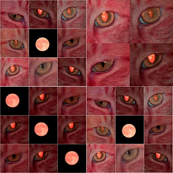 Weekly Photo Challenge: CREEPY... Staring Eyes