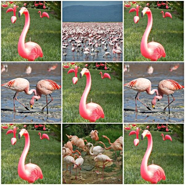 Pink Flamingos: A Preposterous Story