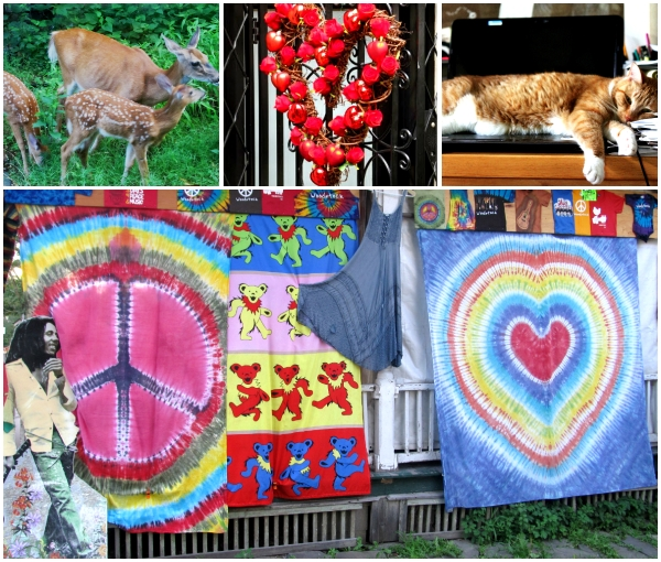 Weekly Photo Challenge: One Love ... a collage of a family of deer, our family cat lying across a laptop and a display of tie-dyed fabric and a picture of Bob Marley outside a store in Woodstock, NY