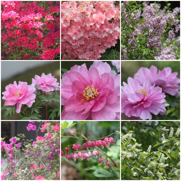 Weekly Photo Challenge: Jubilant - Spring to summer garden flora