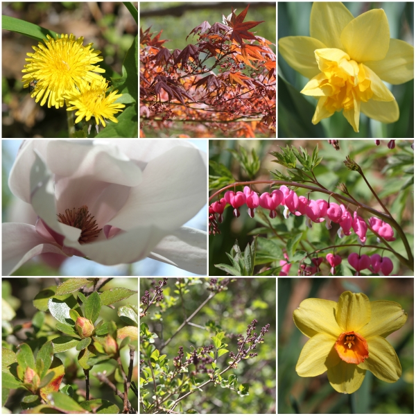 Weekly Photo Challenge: PURE - Early morning garden blooms and views of the Hudson River North and South