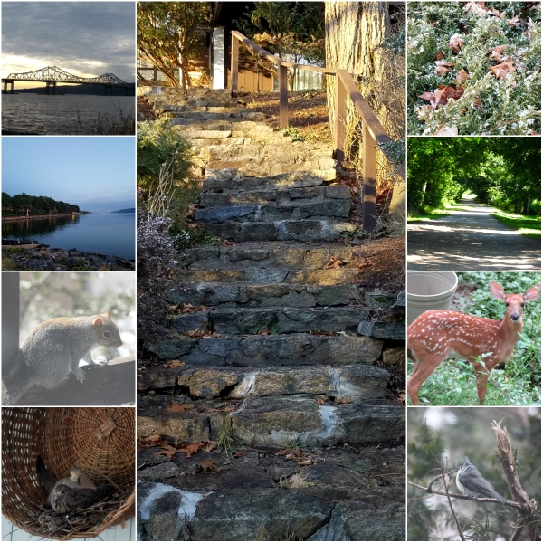 Weekly Photo Challenge: RESILIENT - like all in nature and life...