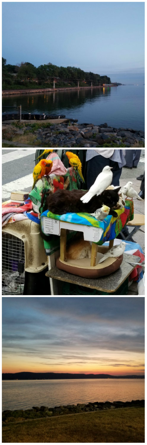Photo Challenge: LAYERED - A Street Entertainer & his Companions